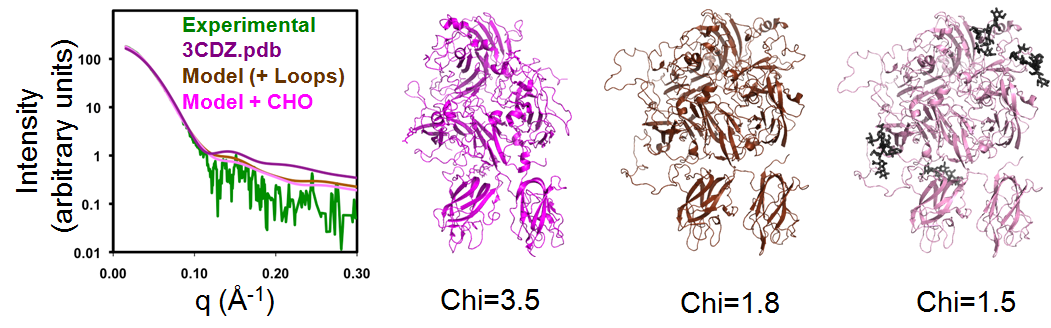 The molecular dynamics simulation program, BILBOMD, was used to model conformers of BDD rFVIII and compare their theoretical X-ray scattering curves to experimental scattering data. The crystal structure of BDD rFVIII (3CDZ.pdb) yielded a relatively poor fit (Chi=3.5), which was significantly improved (Chi=1.8) by the inclusion of loops corresponding to regions where the electron density was absent from the crystal structure. The addition of N-linked carbohydrate (CHO) further improved the fit (Chi=1.5).