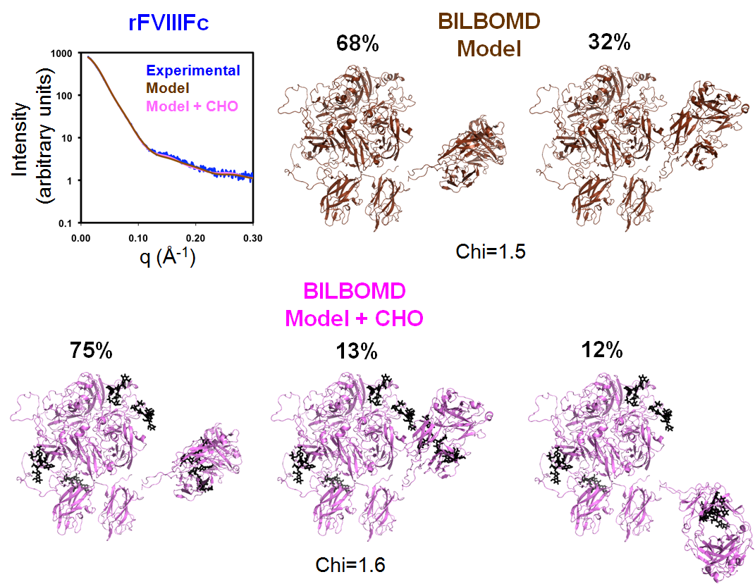 BILBOMD was used to generate a minimal ensemble of structures for which theoretical X-ray scattering curves optimally fit experimental scattering data. The rFVIIIFc model based on the BDD rFVIII BILBOMD model with surface loops but lacking N glycans comprises an ensemble of two structures with 68% and 32% occupancy (Chi=1.5). The inclusion of N-linked carbohydrate (CHO) in the model yielded a similar fit (Chi=1.6) for an ensemble of three structures with 75%, 13%, and 12% occupancy.